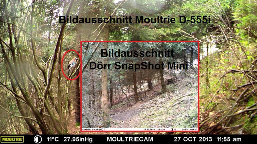 Bildausschnitt Dörr SnapShot Mini vs. Moultrie D-555i - Bild: Wildkamera-Test.com