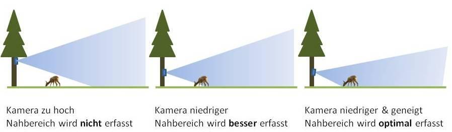 Die richtige Höhe entscheidet! - Grafik Wildkamera-Test.com