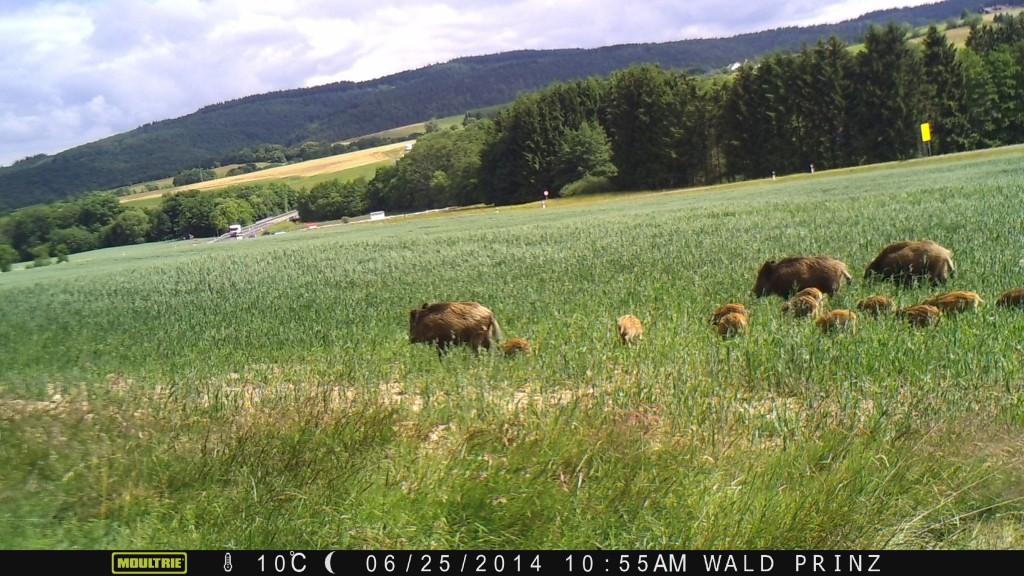 ... um schließlich noch den rechten - Bild: Wildkamera-Test.com