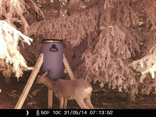 Farbfehler bei Aufnahmen im Tageslicht - Bild: Wildkamera-Test.com