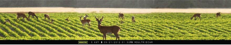 Die Moultrie Panorama Wildkamera macht auf Wunsch Panoramaaufnahmen, die aus 3 Einzebildern zusammengesetzt werden; das Ergebnis ist ein Foto im ungewöhnlichen Format 48:9 - Bild: Moultrie