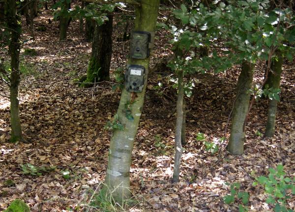 Die Waid-Life Optimus (oben) ist optimal getarnt; bei der ALDI Maginon WK3 Wildkamera (unten) wirkt das helle LED-Feld im Wald wie ein Fremdkörper - Bild: Wildkmarea-Test.com