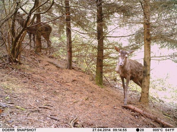 Die gleiche Situation von der Dörr SnapShot Mini aufgenommen - Bild: Wildkamera-Test.con