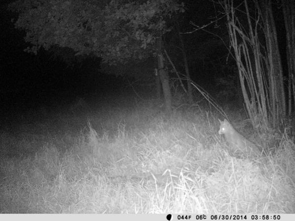 So stellen wir uns eine gute Nachtaufnahme vor. - Bild: Wildkamera-Test.com