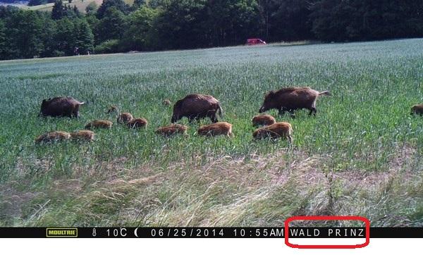 Bei manchen Wildkameras, wie hier bei einer Moultrie kann man einen Namen auswählen, der dann im Bild angezeigt wird - Bild: Wildkamera-Test.com