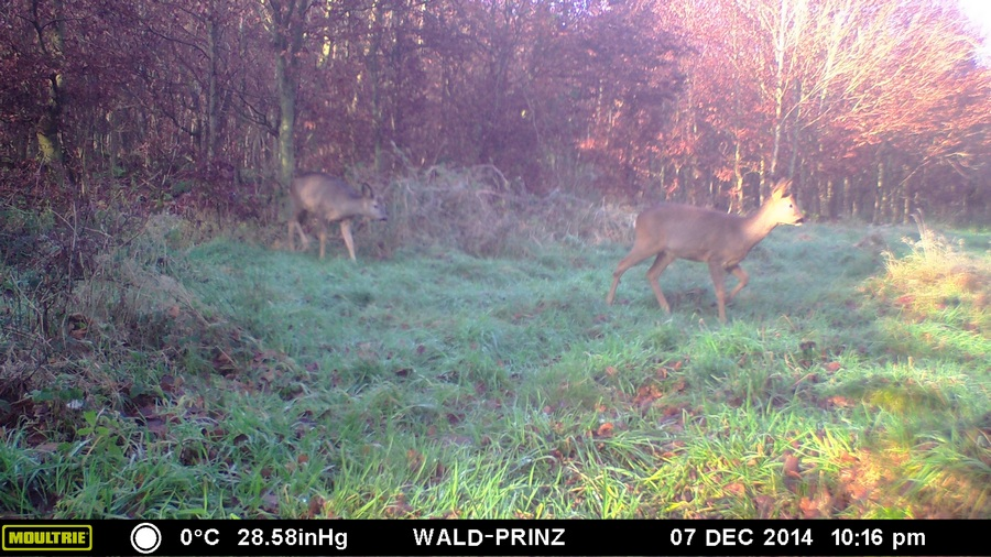 Bild: Wildkamera-Test.com