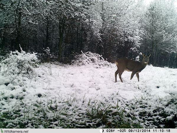 Die gut 100 € günstigere Wild-Vision 5.0 HD macht deutlich bessere Aufnahmen - Bild: Wildkamera-Test.com