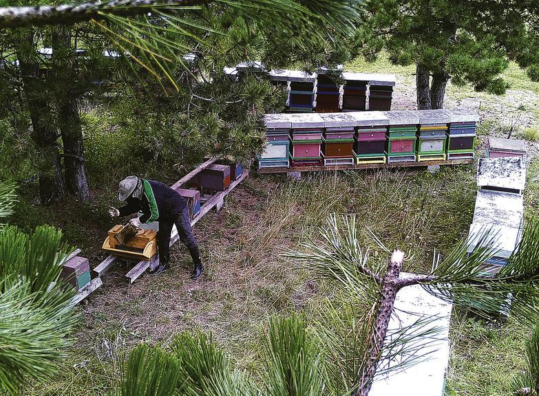 Imker bestehlen Imker wie diese Aufnahme eines Bienendiebs beweist - Bild: Polizeiinspektion Eggendorf