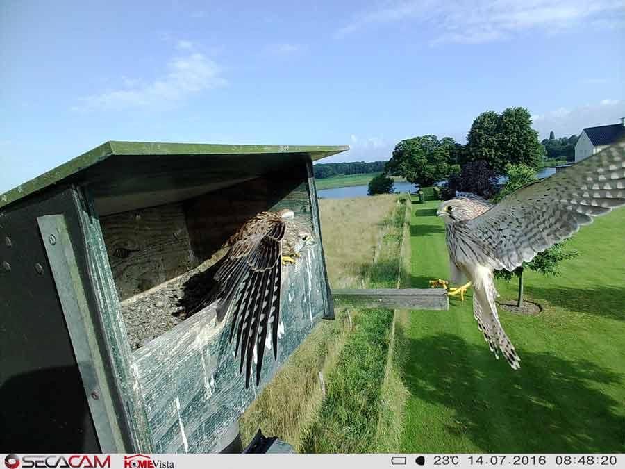 In der Nahdistanz liefert die SecaCam HomeVIsta sensationelle Aufnahmen - Bild: Wildkamera.net