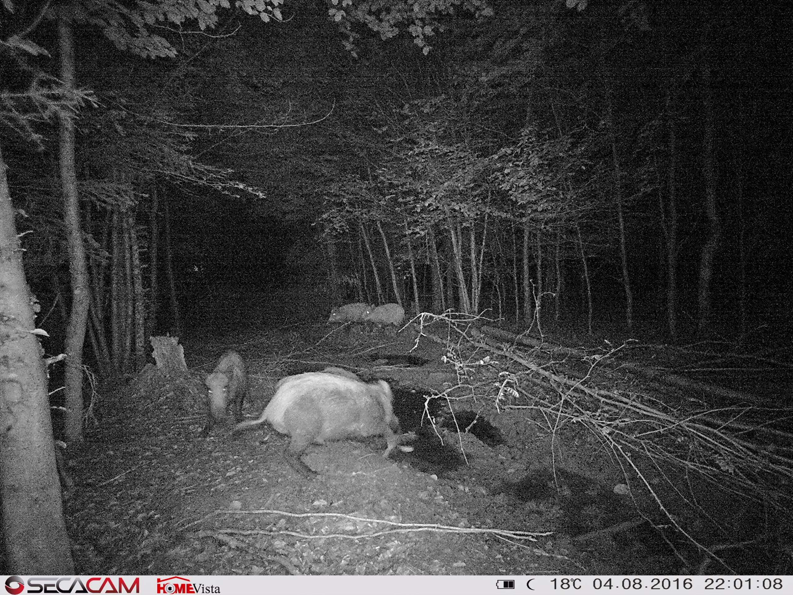 Zum Vergleich die nahezu zeitgleiche Aufnahme der SecaCam HomeVista - Bild: Wildkamera-Test.com